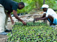 Haiti Environment Reforestation
