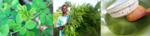 moringa cycle